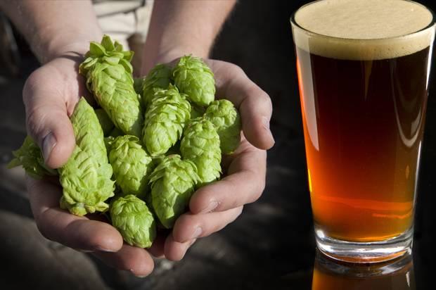 Hops; Beer