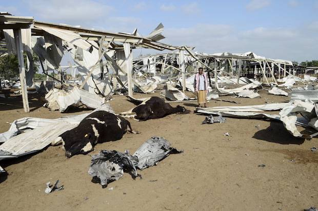 A man looks at cows killed by a Saudi-led air strike at a dairy farm in Bajil in Yemen's western province of Houdieda