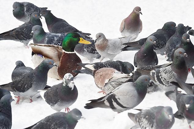"""""""duck"""""""