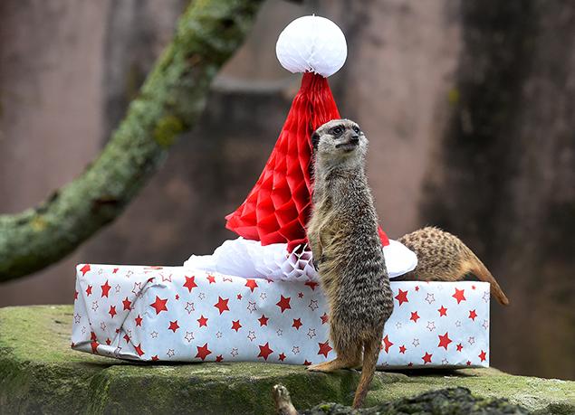 """""""meerkats"""""""
