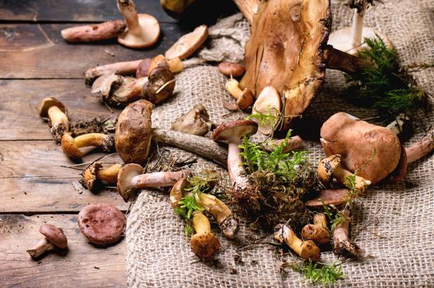 Gift of the fungi: Mushrooms — yes, mushrooms — could help save the world