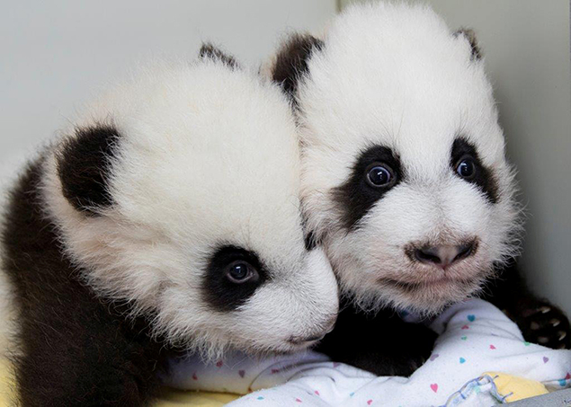 """""""pandas"""""""