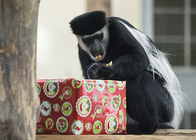 """present3"""