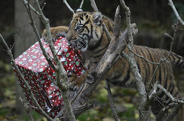 """present"""