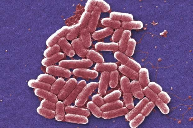 China Superbug