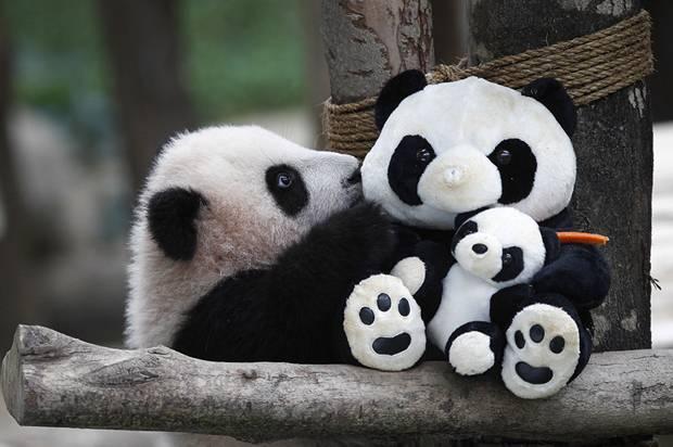 National Panda Day - Salon.com