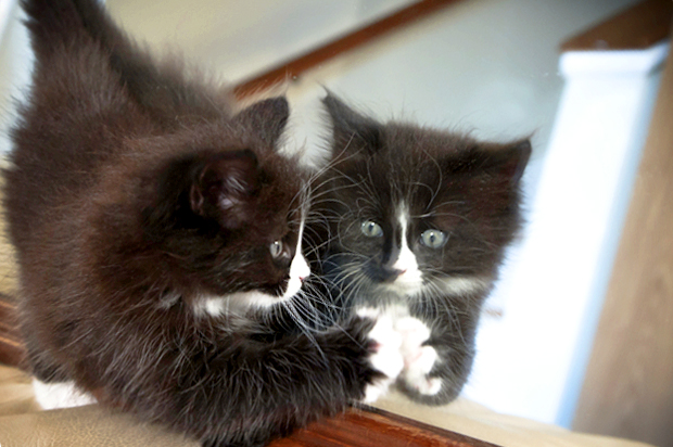 Image result for cat in mirror