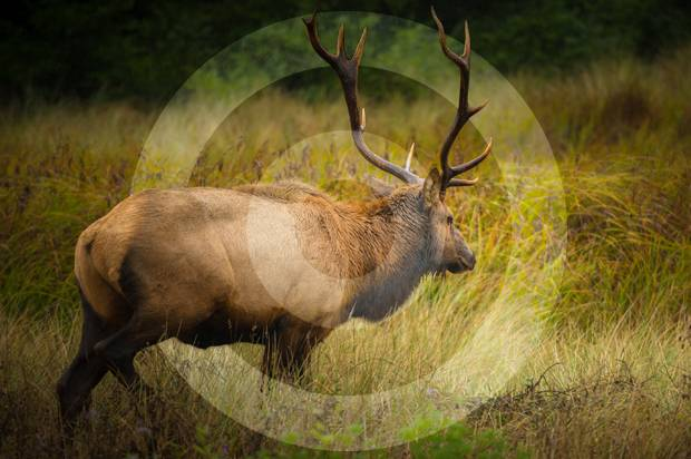 """""""Welcome to my kill"""": An ex-vegetarian's adventures in elk hunting"""