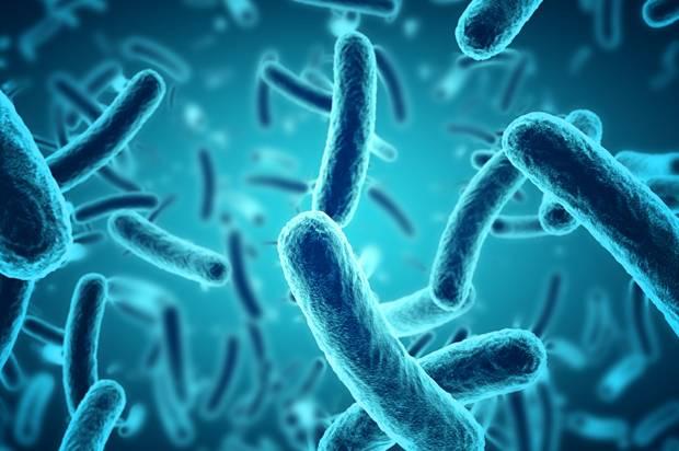 microscopic blue bacteria