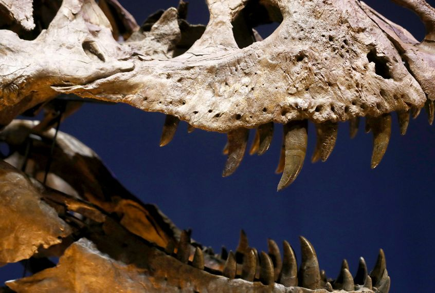 How a fossil–finding competition ruined two paleontologists