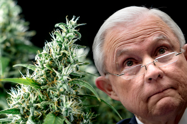 Image result for Sessions Blames Media For Drug Issues And Says Marijuana Isn't Good For You