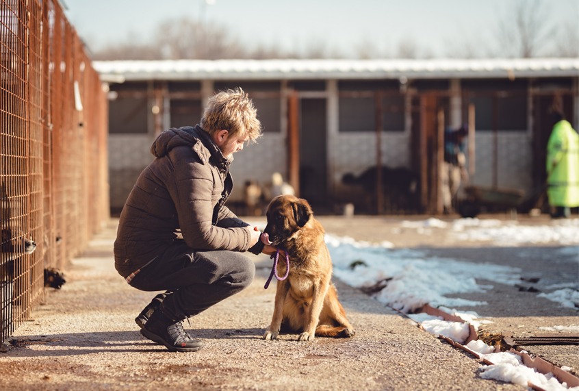Animal shelter workers who believe they are gifted and ...  |Animal Rescue Worker