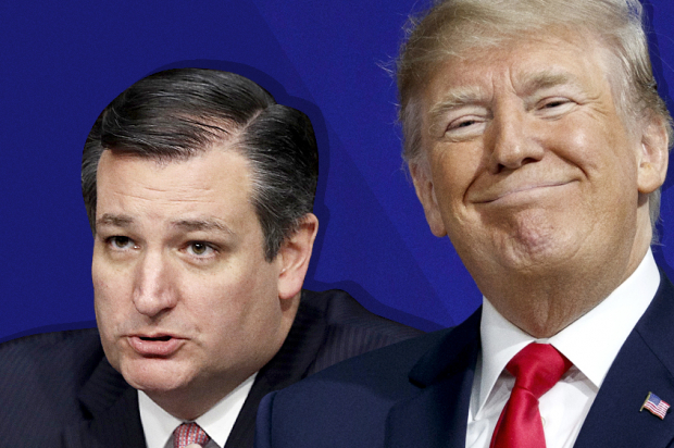 Ted Cruz grovels before Donald Trump with flattering Time profile