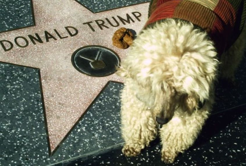 Why doesn't Trump have a dog — and should he get one