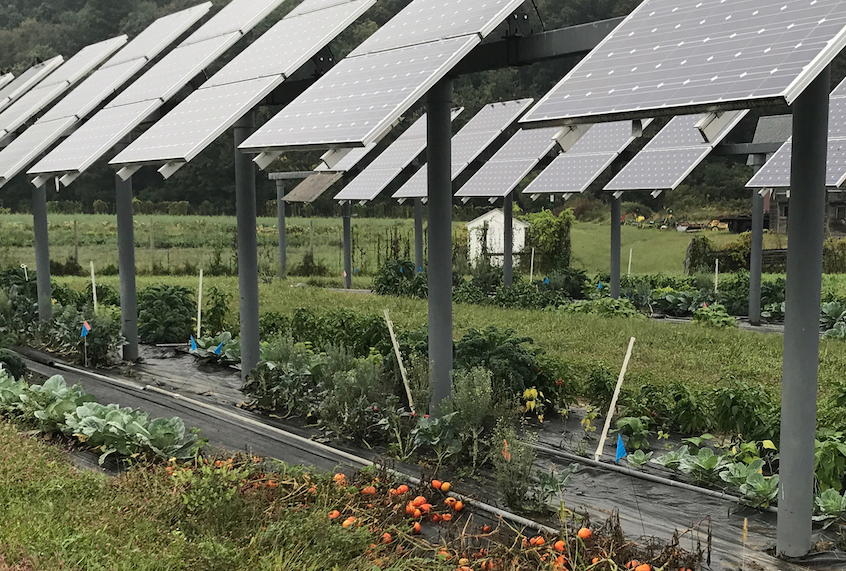 Agrivoltaics Solar Panels On Farms Could Be A Win Win