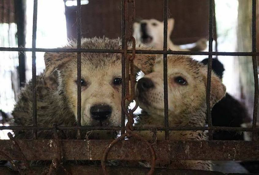 For millions of dogs, South Korea is hell on Earth | Salon com
