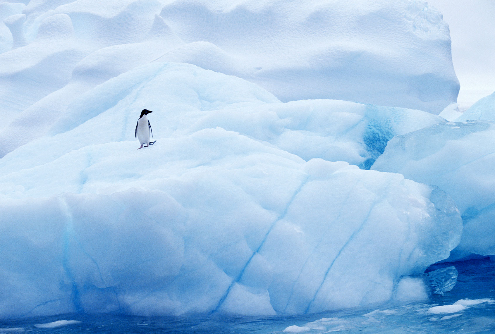 How the coronavirus ended up in Antarctica
