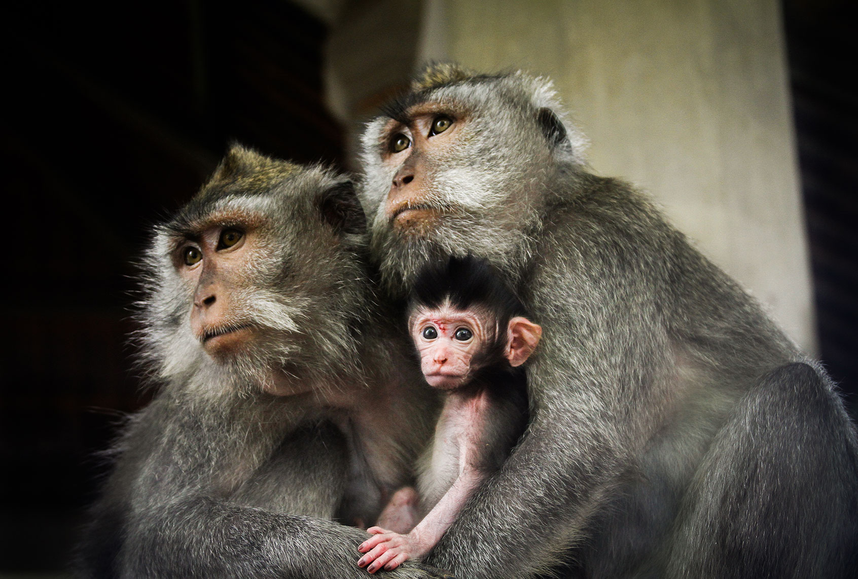 The bioethics of the first human-monkey hybrid embryo - Salon